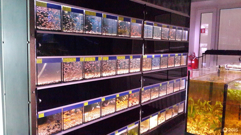 пробовала картинки аквариумного магазина уже много