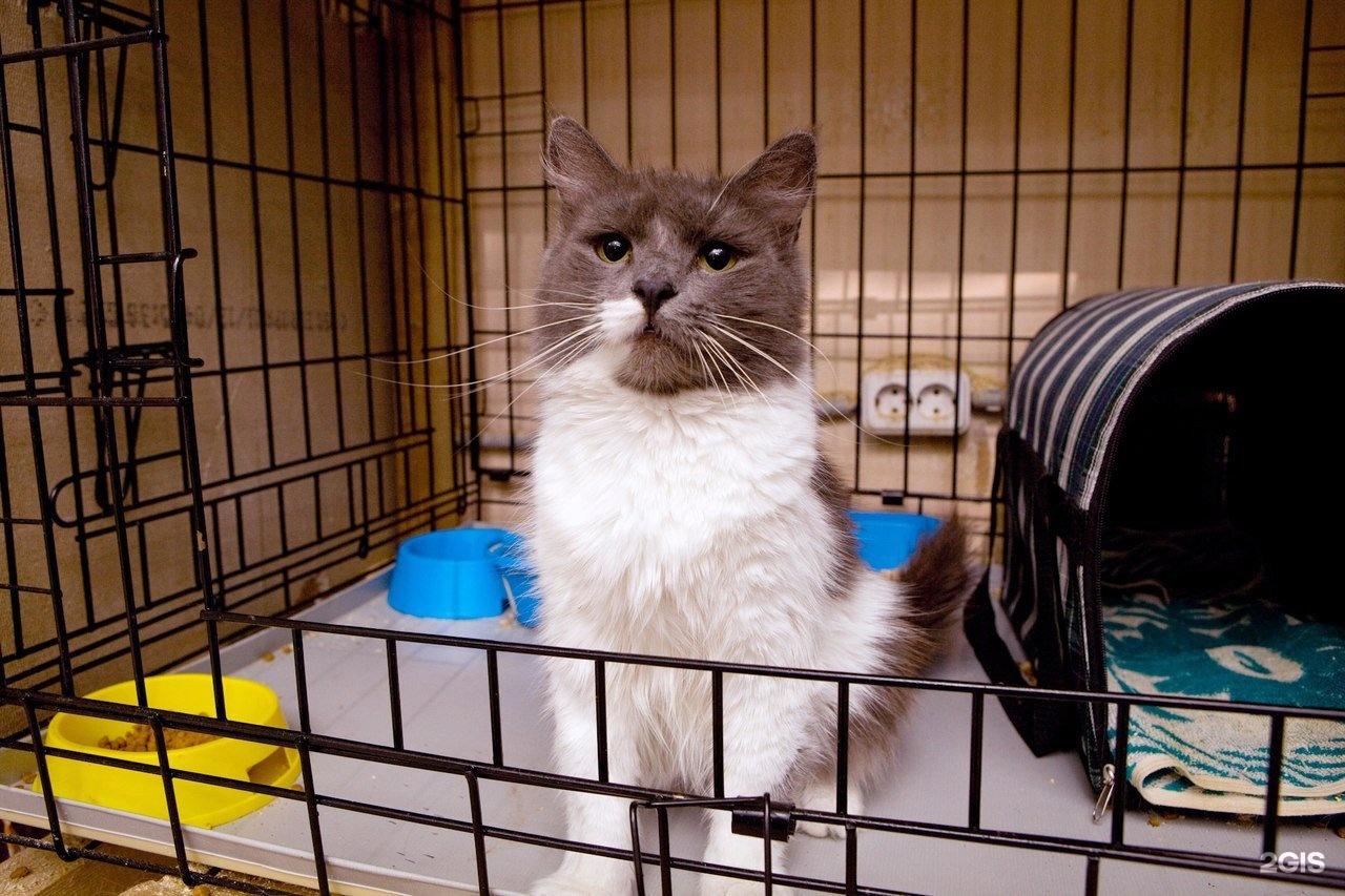 хочу приюты котят в москве с фото промокните