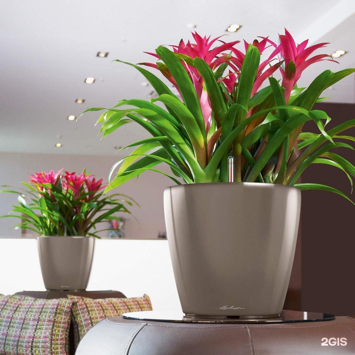 Фото и название домашних цветов в горшочках