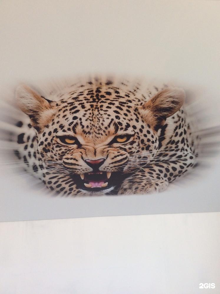 натяжные потолки с фотопечатью фото кошки телер