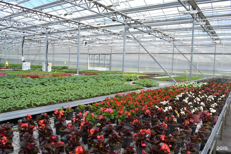 Заказать зимний, купить теплицы цветы в екатеринбурге