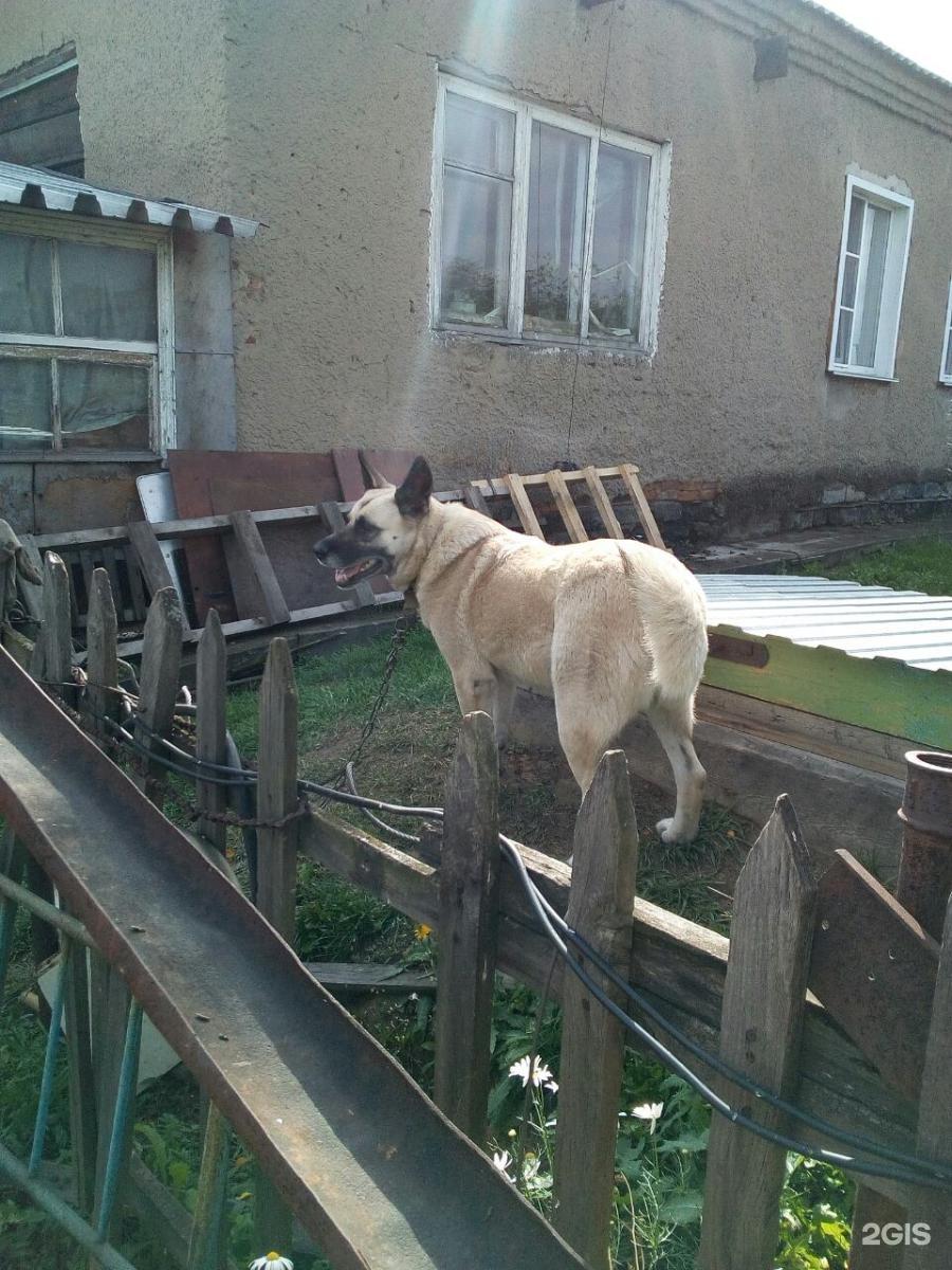 забывайте, что приют для животных в кемерово фото это