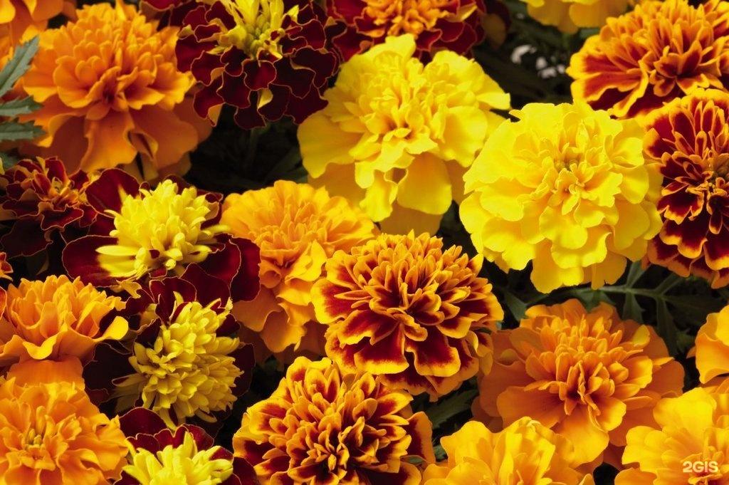 Цветы однолетники купить, свадебный