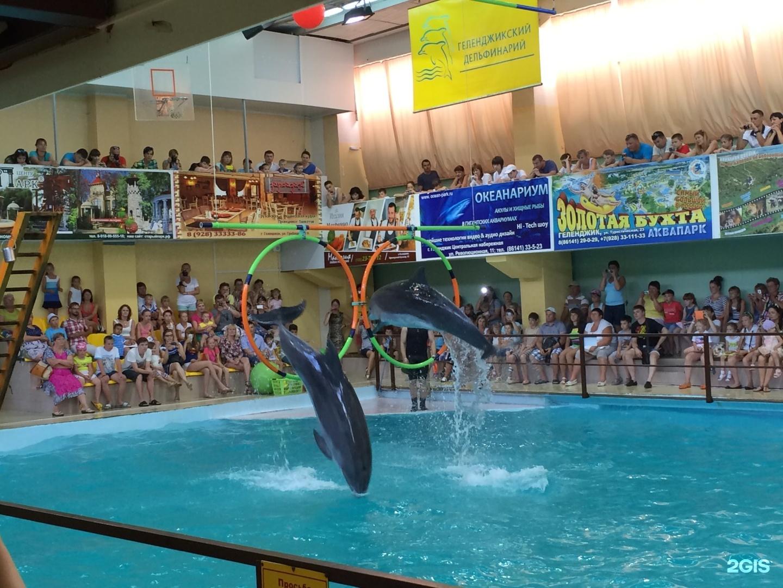 геленджик дельфинарий сколько стоит фото можно использовать