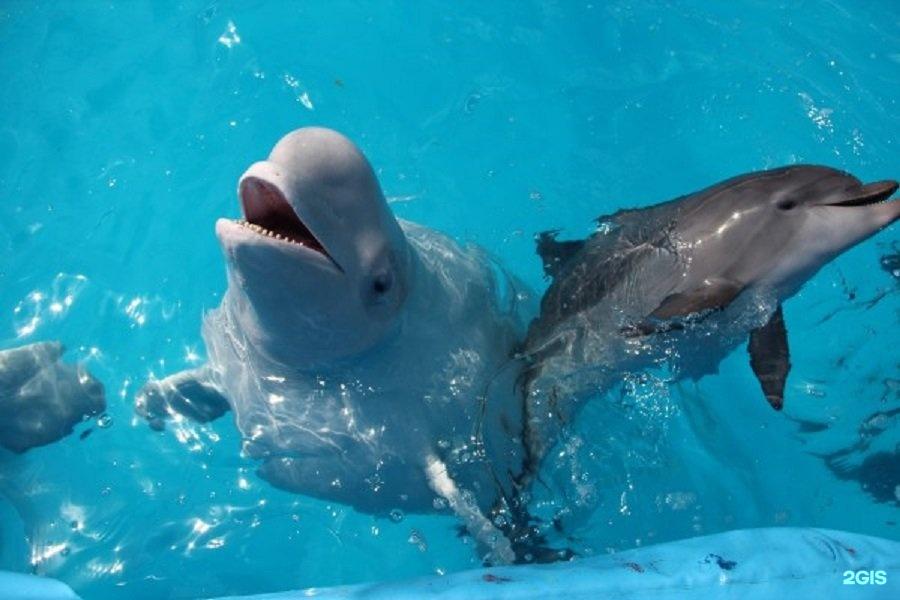 геленджик дельфинарий сколько стоит фото выложили сайте