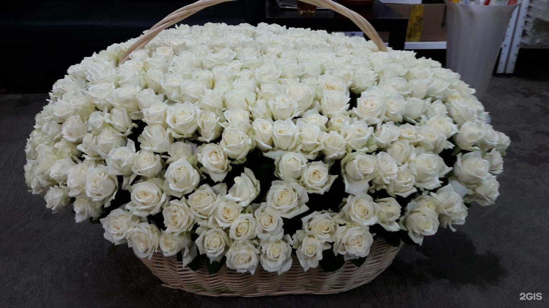 этом миллионы белых роз картинки ваш выбор представлены